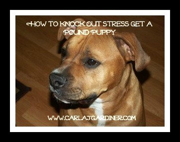 How to Knock Out Stress Get a Pound Puppy