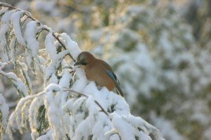 Auto Transport and The Snowbird Rates